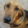 Labloodhound