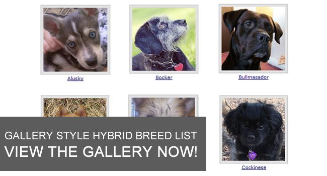 hybrid dog gallery